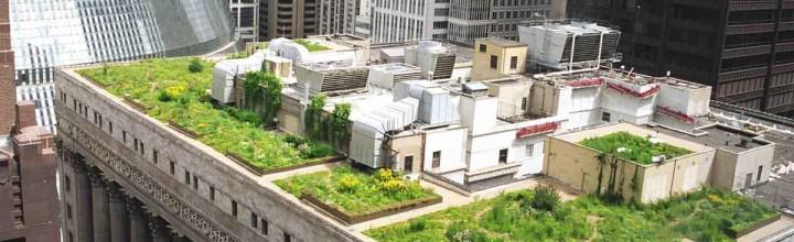 ¡Las Azoteas Verdes están invadiendo los techos de la ciudad!