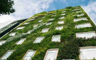 Edificios verdes for Tipos de muros verdes