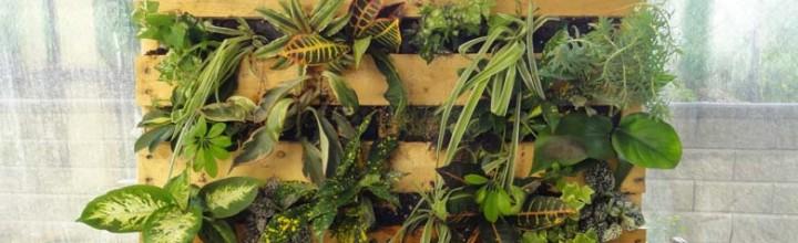 Cómo hacer su propio jardín vertical para la casa